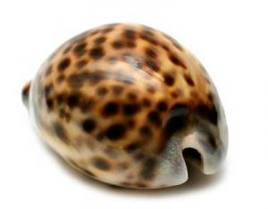 Cowrie 2